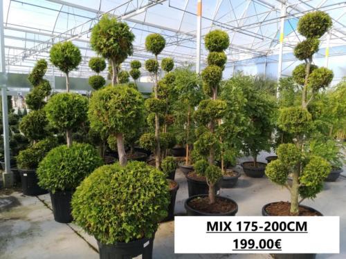 5- TOPIAIRE MIX 175-200 199.00
